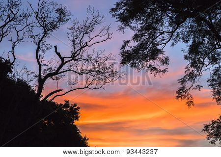 Sunset Colors Trees Silhouetted