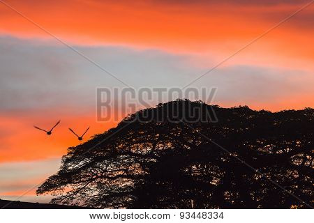 Sunset Birds Clouds Colors Trees Silhouetted