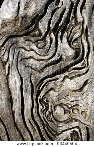Old Man in the Tree Trunk