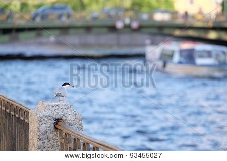 Bird sits on a parapet on a river embankment