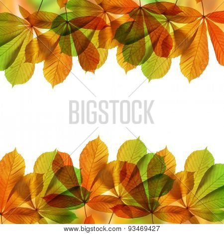 Frame from autumn leaves of chestnut tree