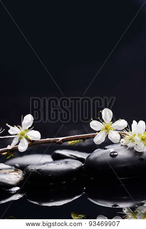 Still life with Cherry blossom, with therapy stones