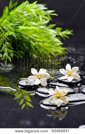 Still life with  gardenia with green plant on black pebbles
