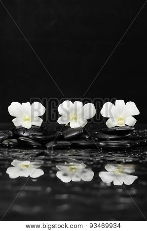 Three white orchid flowers with therapy stones reflection