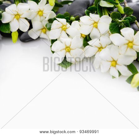 Set of gardenia with green plant on black pebbles