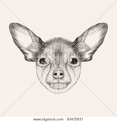 Sketch toy Terrier. Hand Drawn Face Of Dog Illustration.