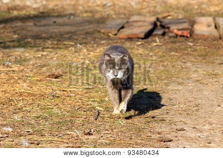 Rural Cat Going For A Walk