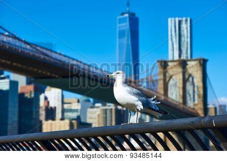 Seagull with Manhattan skyline and Brooklyn bridge in background, New York City.