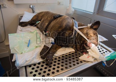 Dental care for dog at the veterinarian