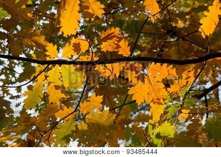 Autumn leaves in tree at forest