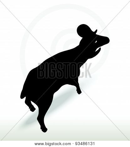 Big Horn Sheep  Silhouette In Face Upward  Pose