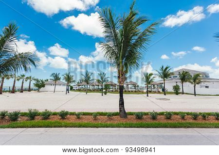 Palm Trees In A Vacation Resort