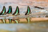 stock photo of common  - Group of Common Bluebottle  - JPG