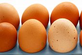 picture of egg-laying  - Fresh eggs close up on a white background - JPG