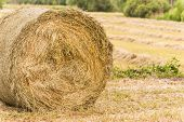 picture of hay bale  - Bale of hay drying in the sun - JPG