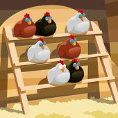 image of hen house  - Hens sleep on a perch in a henhouse - JPG