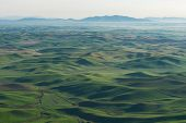 pic of butt  - Farmland in early morning Steptoe Butte State Park Oakesdale Washington - JPG