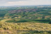 image of butt  - Farmland at dusk Steptoe Butte State Park Oakesdale Washington - JPG