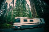 pic of redwood forest  - California RV Trip - JPG