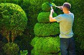 stock photo of tree trim  - Topiary Trimming Plants - JPG