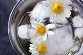picture of chamomile  - Glass of cold chamomile tea with ice cubes and chamomile flowers - JPG