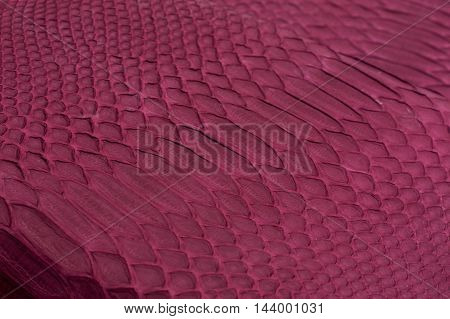 Python snakeskin leather background