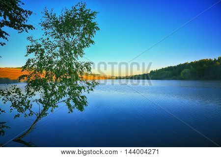 Lonely birch tree growing in a pond at sunrise. blue sky