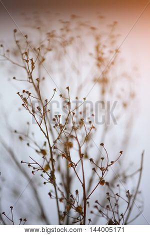 silhouette of dried plant on a background sunset. Shallow depth of field