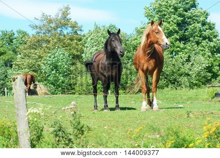 black and brown horses in enclosure field