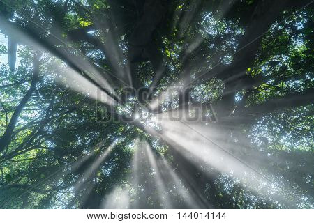 Morning mist rises up from rain forest floor with sun rays