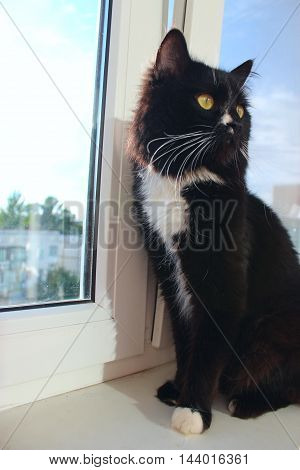 black cat sits on the window-sill with beautiful orchid