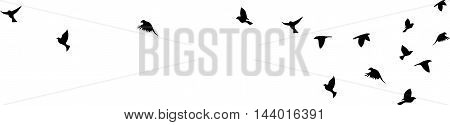 Bird flying silhouette vector on a white background