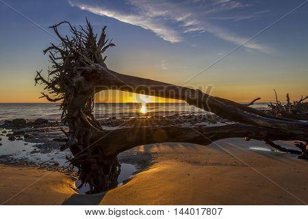 Sunrise Over Driftwood Beach - Jekyll Island