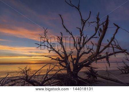 Driftwood And Tree Branches On A Georgia Beach At Sunset