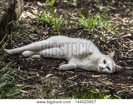 beutiful white cat playing in a garden