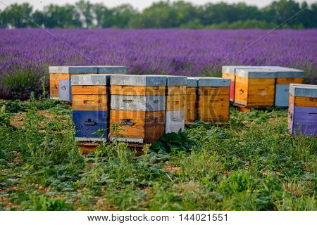 Bee hives in Provence, France
