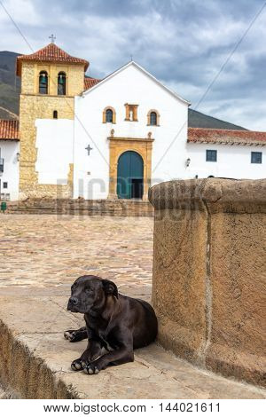 Dog And Church View
