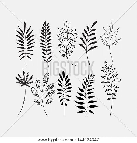 Vector leaf icon set. Silhouette and outlined different leaves of trees.