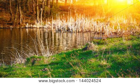 Beautiful sunset over calm lake. Green grass at foreground