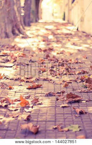 Fallen autumn leafs in a street sidewalk