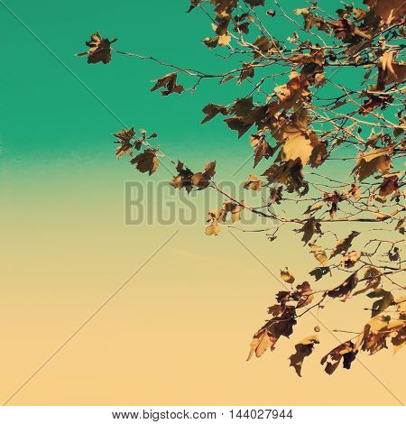 Various vintage autumn leafs in a tree