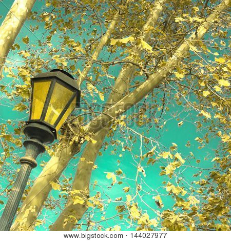 Autumn leafs in a tree and vintage street light