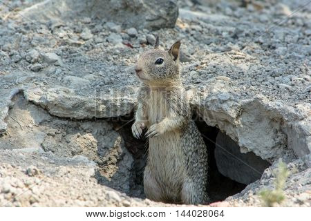Cute Squirrel Playing Outside Cave