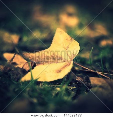 Golden autumn leafs in the ground in a forest