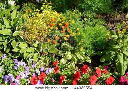 Flowerbed with lots of different flowers it can be used as background.