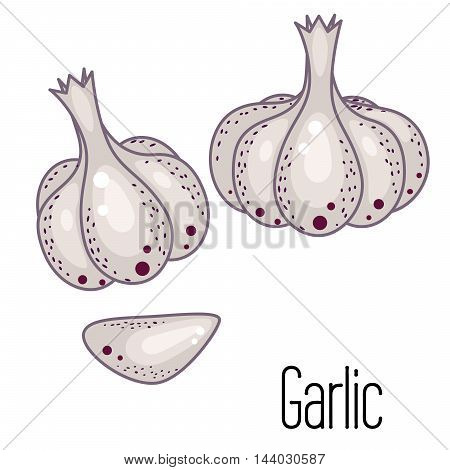 Garlic vector illustration. Garlic clove and bulb condiment icons on white.
