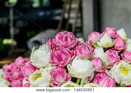 beautiful  Bush potted lilies The beautifully decorative.