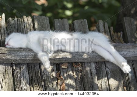 Charming white kitten with elongated feet sleeps on the fence