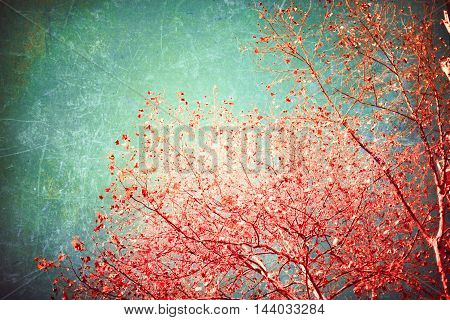 Red autumn leafs in a tree over mint sky