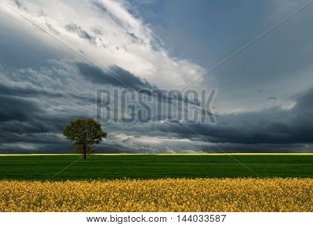 One tree and perfect grass field,beautiful cloudscape...